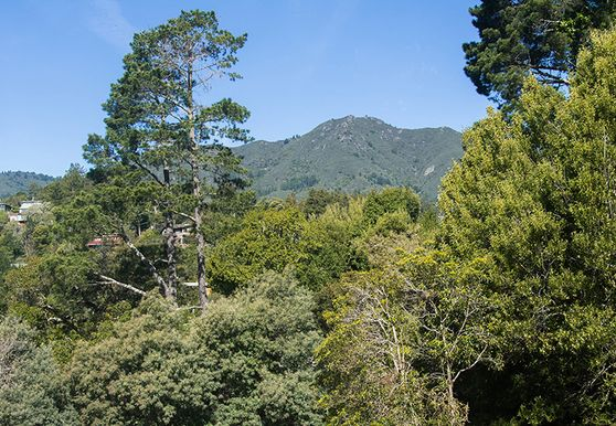 Photo of Mill Valley - Photo 5