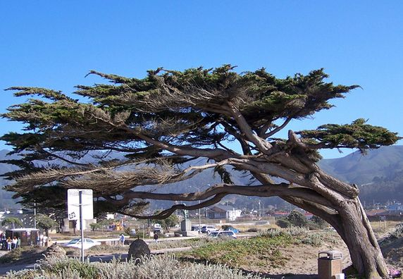 Photo of Pacifica - Photo 1