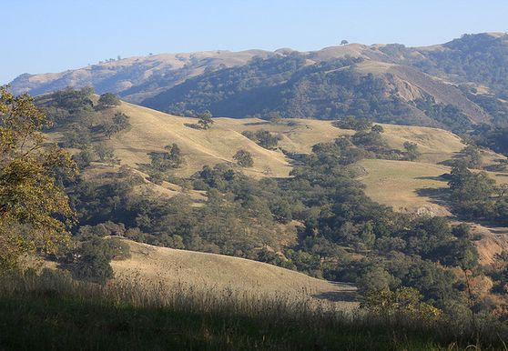 Photo of Sunol - Photo 2