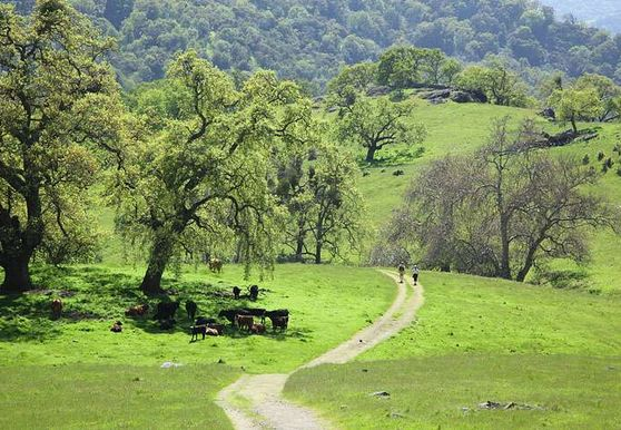 Photo of Sunol - Photo 4
