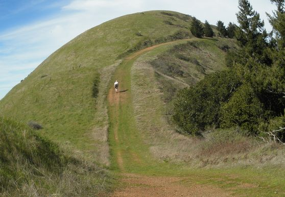 Photo of Forest Knolls, Marin - Photo 21