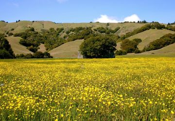 9 Meadow View Lane San Geronimo, CA 94963